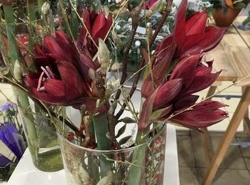 Bloemen en planten De Molen - snijbloemen