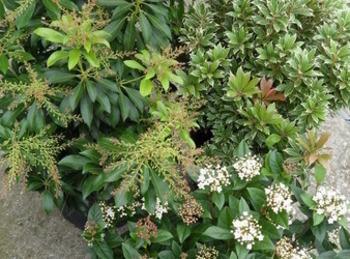 Bloemen en planten De Molen  - vaste planten